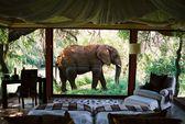 Turquoise Holidays is the UK's leading honeymoon safari company